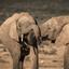 Addo nationaal park Zuid-Afrika