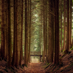 The forest of the witch
