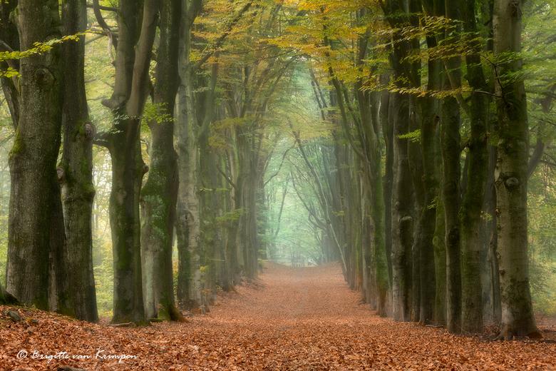 Lichtenbeek in the morning - Het was weer genieten s'ochtends vroeg in het bos vanochtend