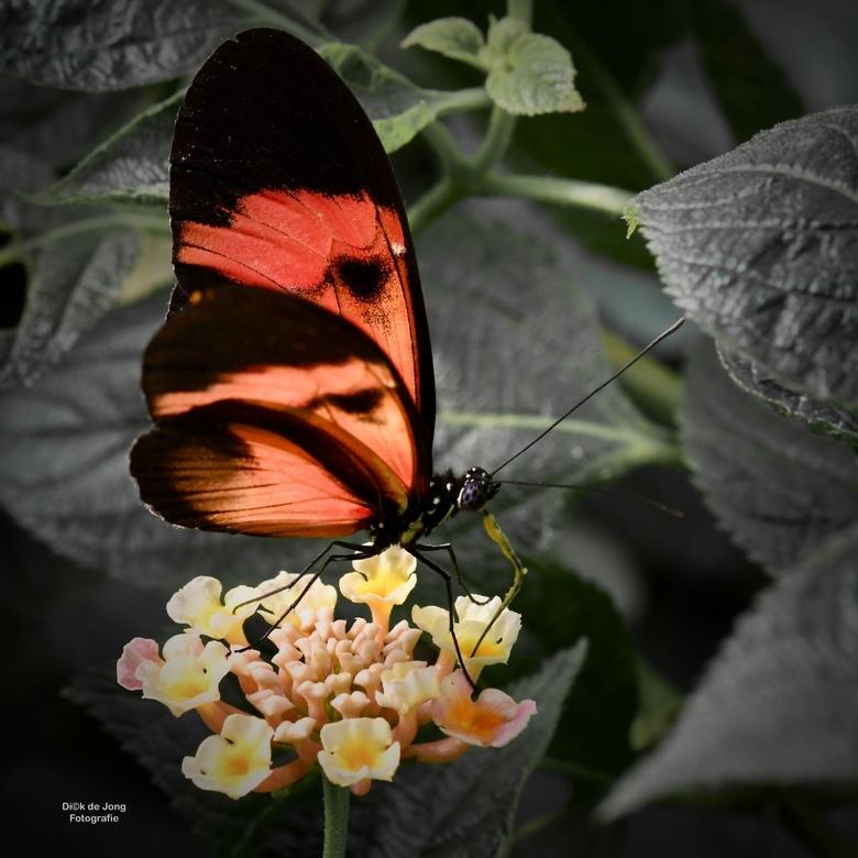 Ontbijt - Aardig gelukte foto van een vlinder die aan het eten is.