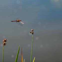Vliegende vlucht