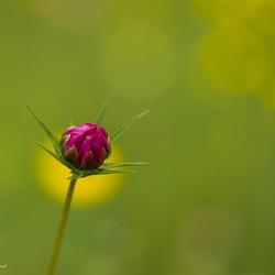 bloem eenzaam