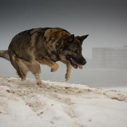 Sneeuw, mist, en kou!