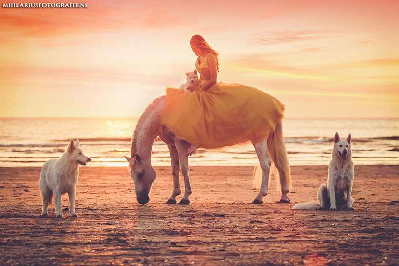 Daisy and the dog pack - .
