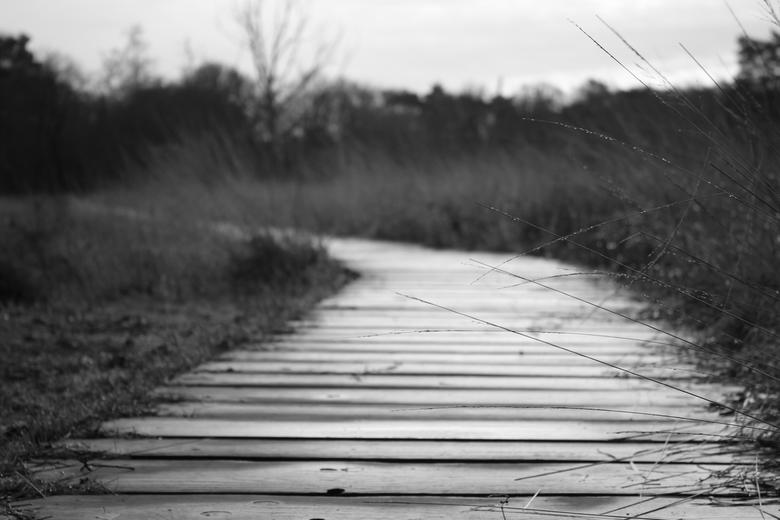 de brug op  - deze foto heb ik gemaakt op de Veluwe in het paradijs <br /> <br /> groeten gerben