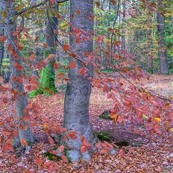 Bos bij Beetsterzwaag