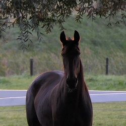 Paard in de ochtendzon