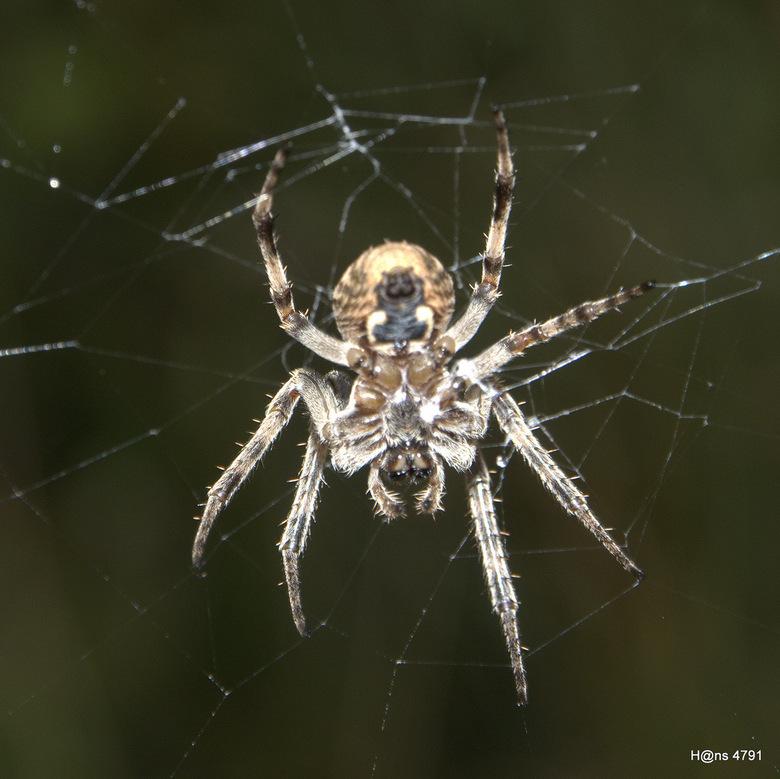 Spiderwomen - Nog eentje uit de oude doos, dit is de andere kant van een vorige upload(creapy one).<br /> Dezelfde spider maar nu van de andere kant