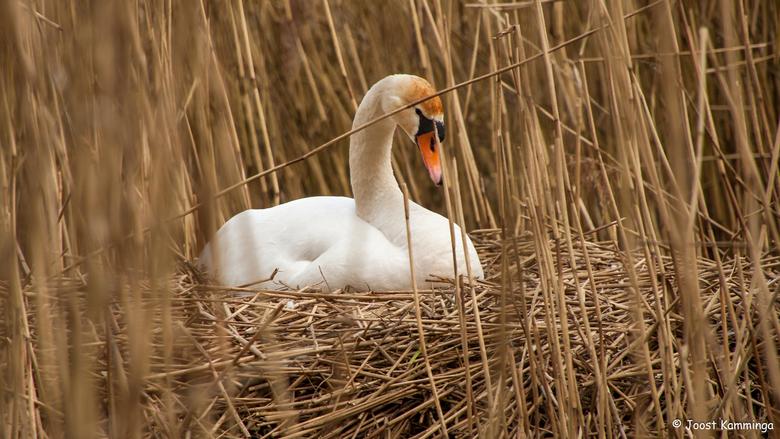 Op het nest -