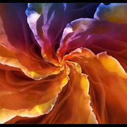 Rose Droste