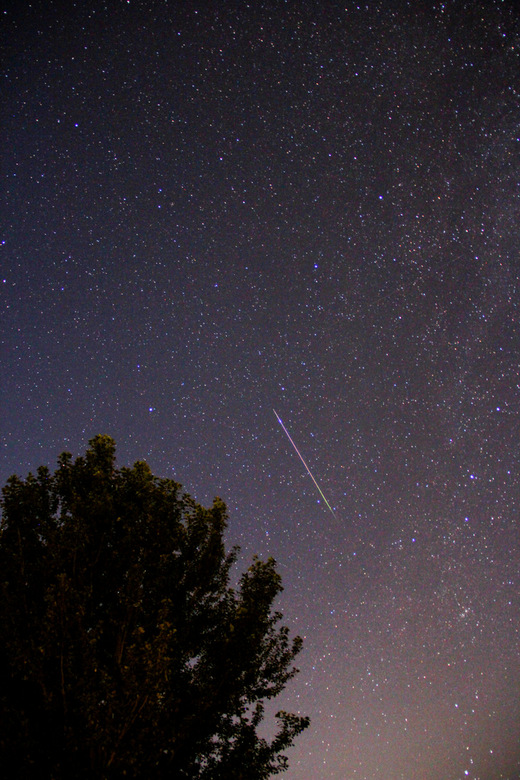 Vallende ster - Deze foto is deze zomer, in augustus, in Vernon, British Columbia, Canada gemaakt.