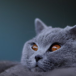 The eye of the cat