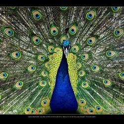 Natuursymmetrie