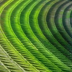 Groene curves