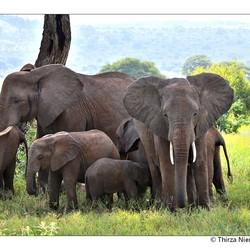 Happy Tembo Family