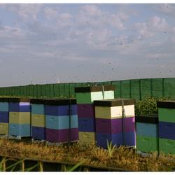 Bijen tijd