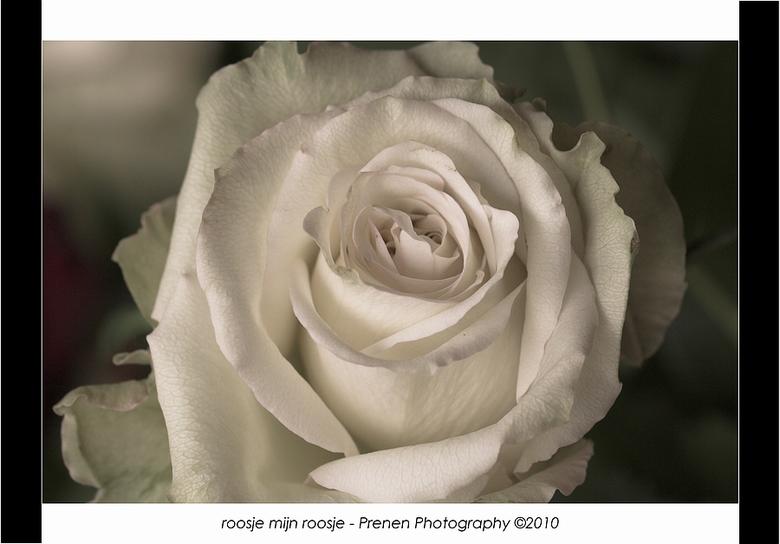 roosje mijn roosje - een roosje uit het boeketje voor moederdag<br /> <br /> Bedankt voor jullie reactie<br /> <br /> Groetjes<br /> Davy