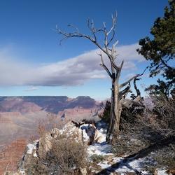 Stilleven bij Grand Canyon