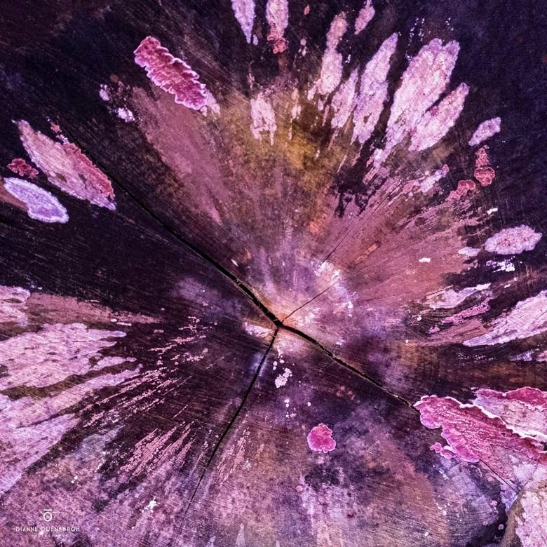 Woodpainting - Creatieve foto? Nee hoor gewoon een omgezaagde boom vastgelegd nadat de natuur zijn werk had gedaan, een spetterend kleurrijk natuurlij