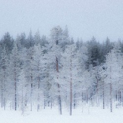 finland 1 (1 van 1)