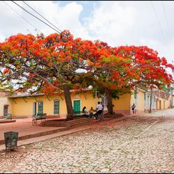 Cuba 54