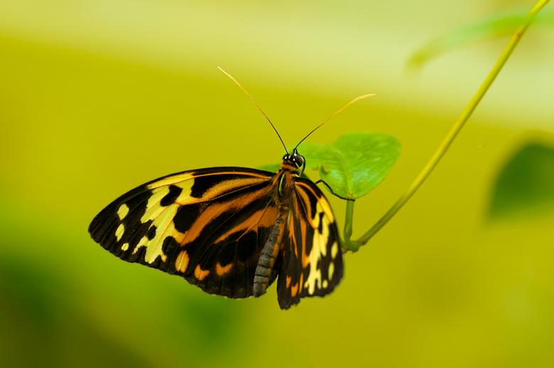 Vlinder - Mooie zachte kleuren van deze vlinder<br />