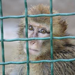 Aapje @ Zoo in Tunis