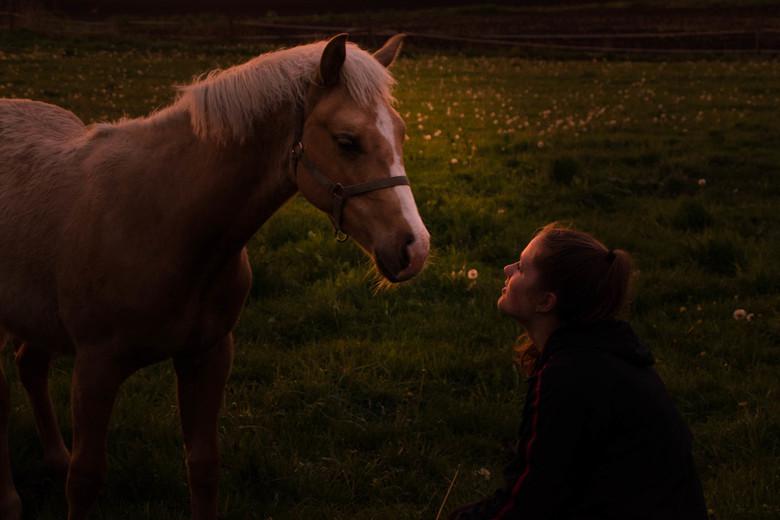 Welterustenkusje - Mooie interactie tussen mijn dochter en dit prachtige jonge paard