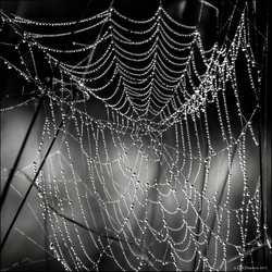 web met mistdruppels