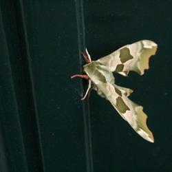 mooie vlinder op de voordeur