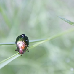 Nice colored bug