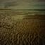 grillige strandvlakte