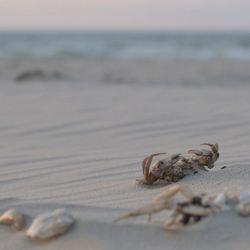 De zee geeft, de zee neemt.....