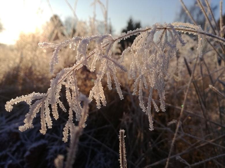 Ijskristallen in de ochtendzon - Een simpel takje wordt een kunstwerk met een beetje ijs en goede verlichting