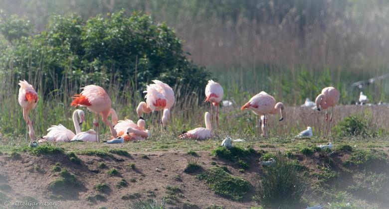 Flamingo familie  - Stond al lang op m'n lijstje op heen te gaan. Ga binnenkort nog eens terug