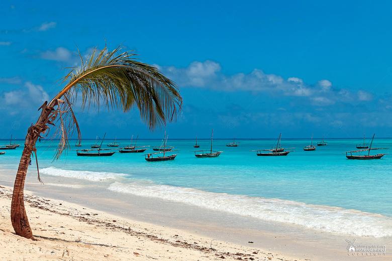 Zanzibar - Het strand bij Nungwi op het eiland Zanzibar, waar talloze vissersbootjes voor de kust liggen.