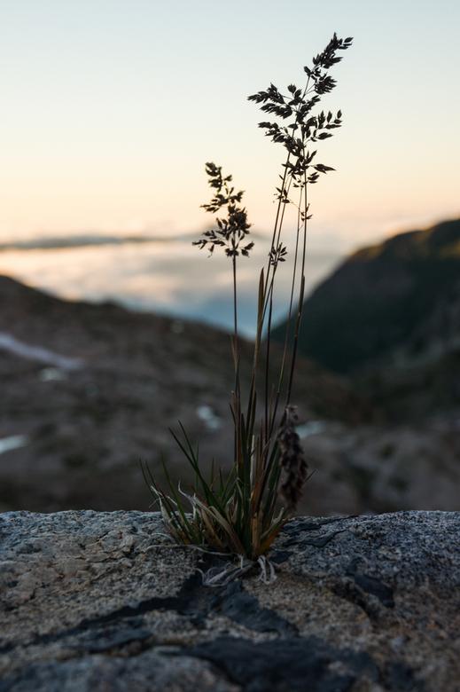 Grass on the Lookout - Een graspolletje dat groeide tussen de stenen van een stuwdam in de Pyreneeën. Ik wilde het grasje scherp op de voorgrond hebbe