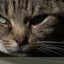 Cat 38