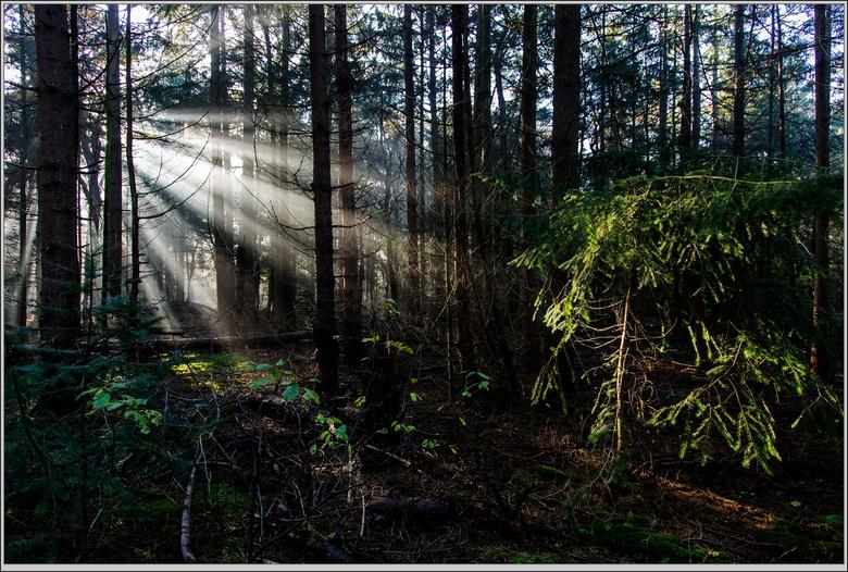 zonnestraaltjes  - een wandeling door het Rijsterbos leverde mooie plaatjes op