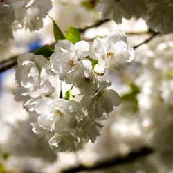voorjaarslicht