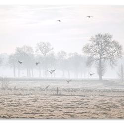 Koude decembermorgen