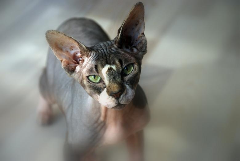 naakt - de ene kat is de andere niet - 9 levens<br /> rimpels voor 10<br /> <br /> <br />