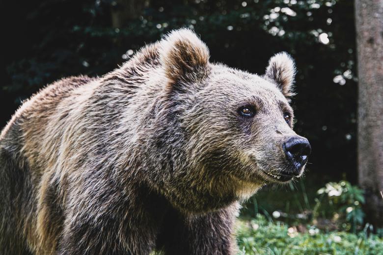 Unbearable - Deze foto is genomen bij een opvangcentrum in Duitsland.<br /> De beren die hier belanden komen onder andere uit het circus met vaak sle