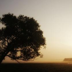 de westenwindboom
