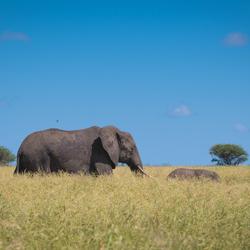 Moeder en kind...zomertijd in Zuid Afrika