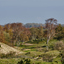 Duinen bij Burgh Haamstede, 2020-10-23