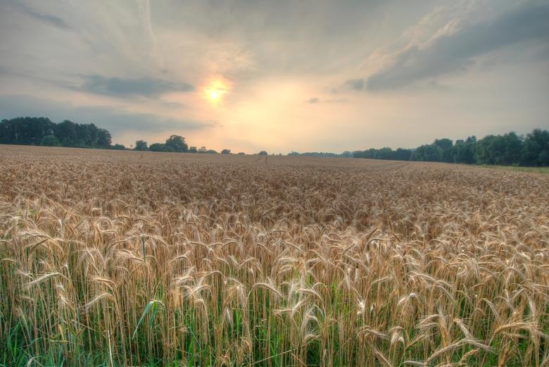 Avondzon bij Vaals - Zonsondergang bij een korenveld in de buurt van  Vaals. Het is lang geleden dat ik zo'n mooi korenveld zag.