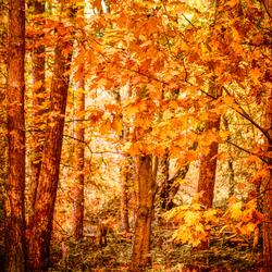 Herfst....