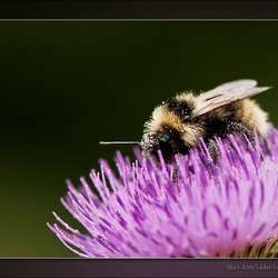 """Busy Bumblebee"""