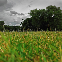 Zuiderpark vanuit insectperspectief